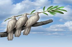 Group Diplomacy as a concept of negotiated peace with three white doves working together in partnership and friendship holding an olive branch as a symbol of fraternity and hope for the future of humanity on the journey for human rights and freedom.